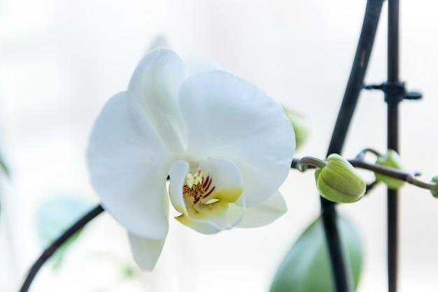 난초 꽃의 화려한 개화를 닫습니다.
