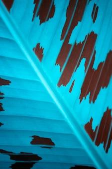 화려한 파란색과 갈색 잎 질감 배경