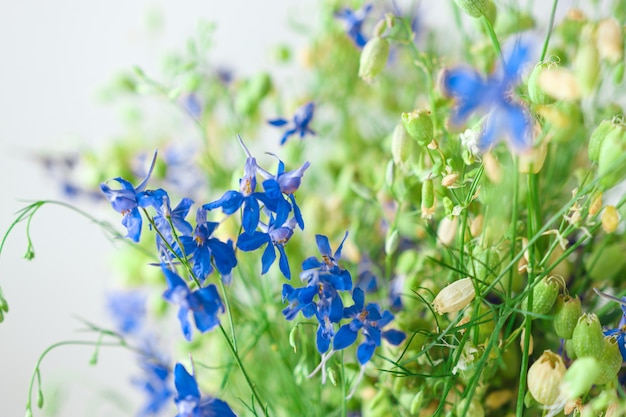 Colorful bouquet of blue wildflowers and green grass with cereals closeup