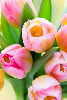 チューリップのカラフルな花束をクローズアップ