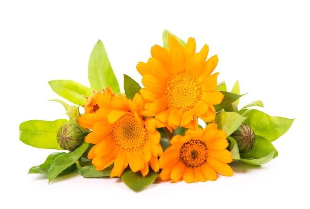 白い背景の上のオレンジ色のキンセンカの花のカラフルな明るいパターン。フラットレイ、上面図、自然な背景