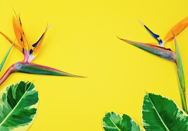 Colorful bright tropical yellow background with strelitzia