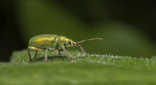 Colorful bug walking on leaf close up