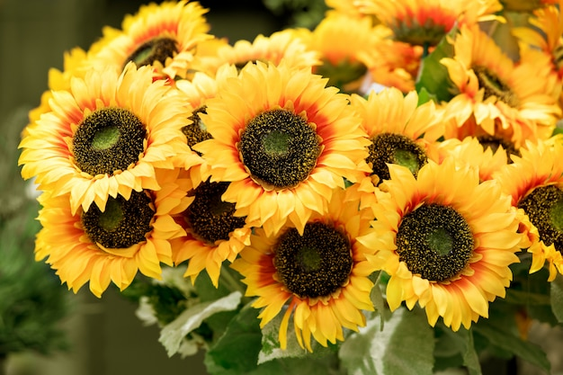 Colorful bunch of yellow sunflowers
