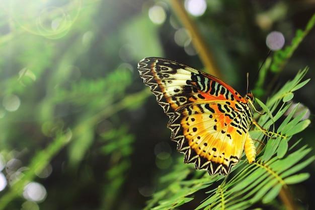 葉の上のカラフルな蝶。