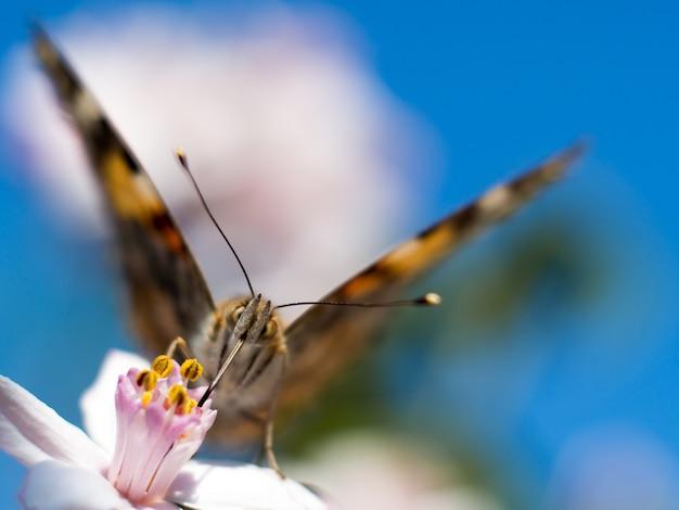 Красочная бабочка, питающаяся ярко-розовым цветком