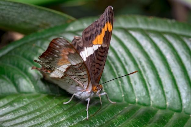 Красочная бабочка ищет пищу на некоторых листьях