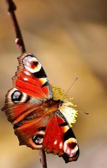 «красочная бабочка на цветке»