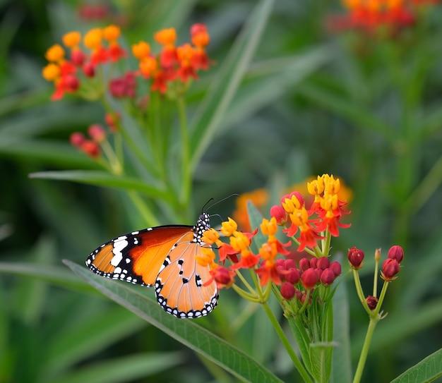 Разноцветная бабочка на оранжевом цветке