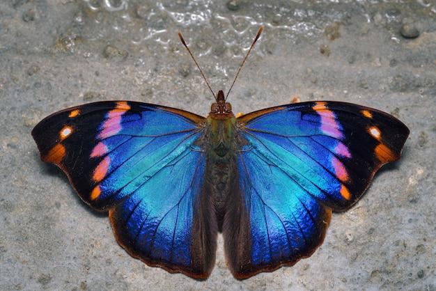 Красочная бабочка сидела на земле кормления