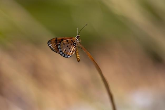 Красочная бабочка сидит на заводе крупным планом