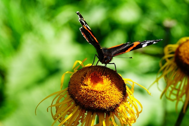 Colorful butterfly on the sunflower