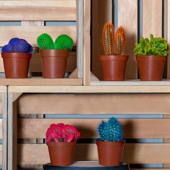 Разноцветные кактусы в деревянной коробке