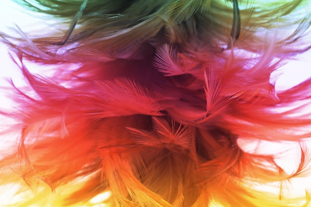 Colorful chicken feathers in soft and blur style