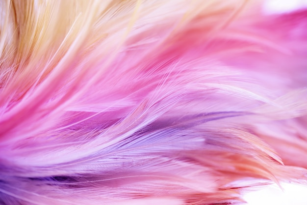 Colorful chicken feathers