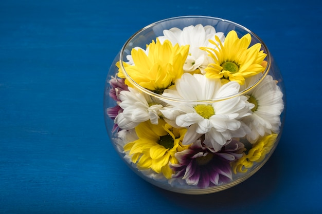 Colorful chrysanthemums in a glass vase on a blue background. copy space