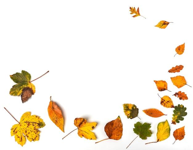 Красочная коллекция осенних листьев как будто ветром на белом