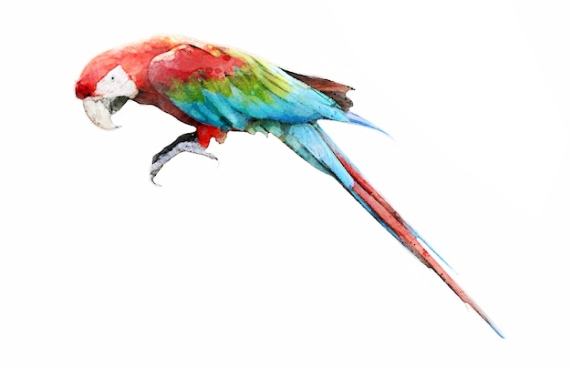 Colorful colorwater drawing macaw bird background.