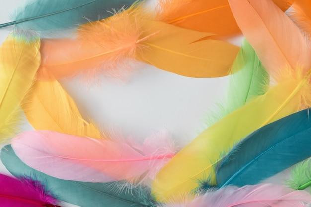 羽で作られたカラフルな構成。ミニマル自由奔放に生きるスタイルの色の概念。フラットレイバックグラウンド。