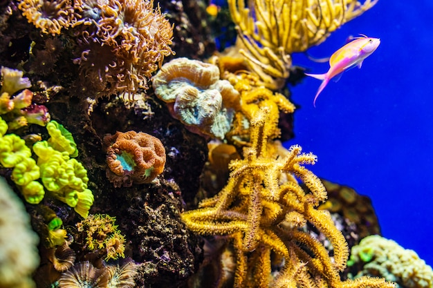 Colorful coral reef with tropical fishes