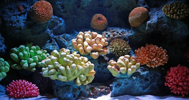 Colorful corals in aquarium tank