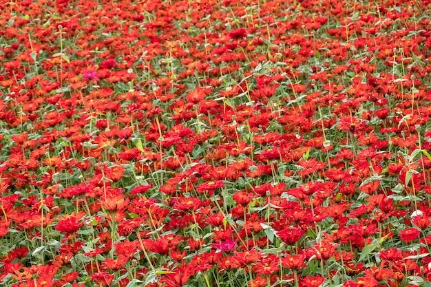 Красочная космическая цветочная ферма на открытом воздухе