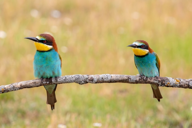 Colorful couple birds sitting on a branch
