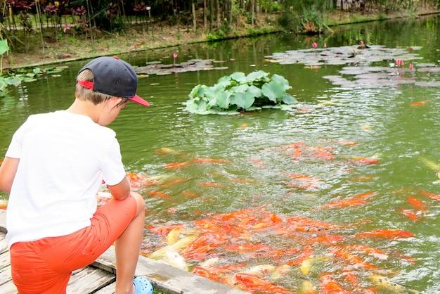 Красочная рыба-кой плавает в пруду
