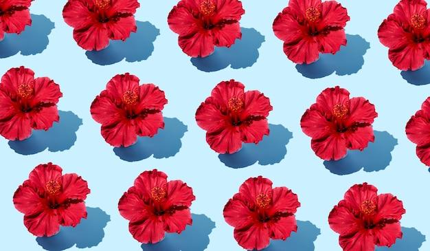 上面からの青い背景にハイビスカスの花のカラフルな創造的なフラットレイパターン