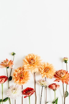 Colorful dahlia and cynicism flowers on white surface