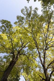 Красочные лиственные деревья в лесу осенью