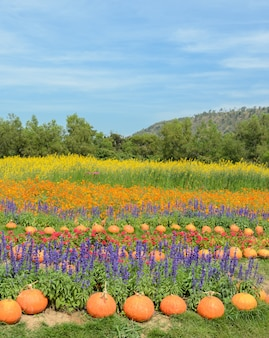 Colorful decorated flower garden with pumpkin
