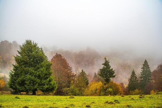 짙은 회색 안개로 덮인 카르파티아 산맥의 따뜻한 녹색 산에 있는 다채로운 울창한 숲