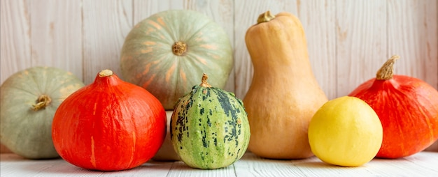 Colorful different pumpkins in front of wooden wall rustic style horizontal