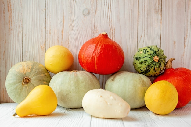Colorful different pumpkins in front of wooden wall rustic style