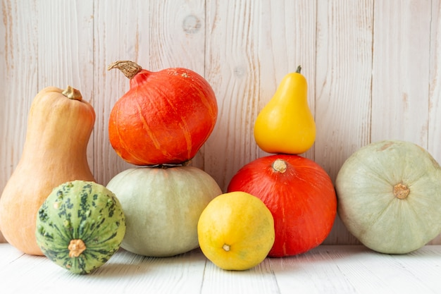 Colorful different pumpkins in front of wooden wall