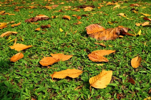 Colorful dry leaves on the green grass in autumn season. nature concept.