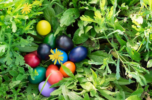 Colorful easter eggs on green grass. copy space. Premium Photo
