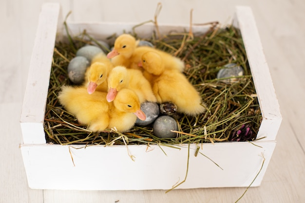 Colorful eggs and ducklings