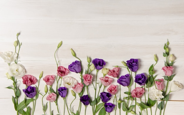 Colorful eustoma flowers on white wooden surface