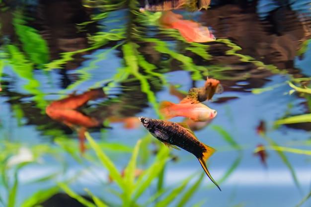 Colorful exotic fish through aquarium window