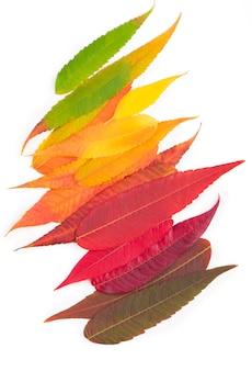 カラフルな秋の葉の背景。紅葉パレット