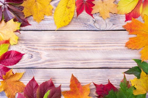素朴な木製の背景にカラフルな秋のカエデの葉。紅葉のライフサイクル。