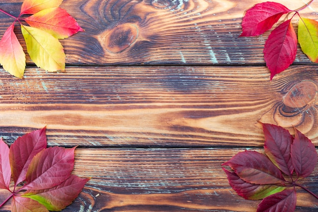 Colorful fall maple leaves on rustic wooden background