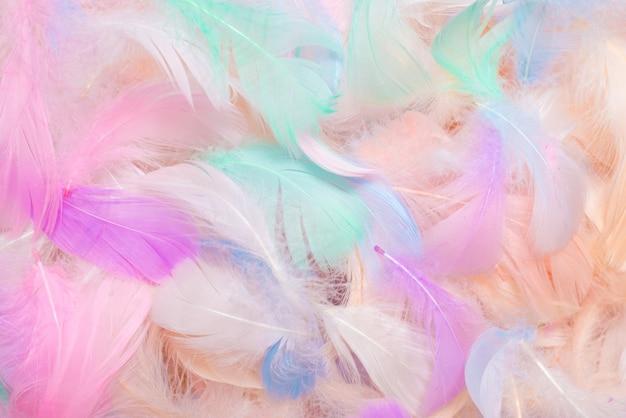 Красочный фон перья, вид сверху