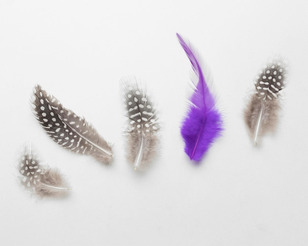 Colorful feather next to gray ones on white background