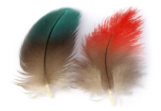 白い背景の上のコンゴウインコ鳥のカラフルな羽