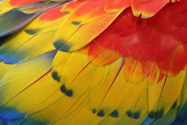 Colorful feathers, macaw feathers texture