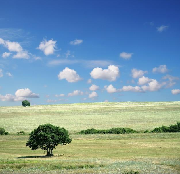 다채로운 필드-풍경 잔디, 푸른 하늘과 흰 구름