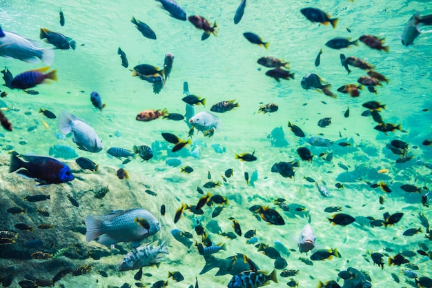 Разноцветные рыбы в подводном